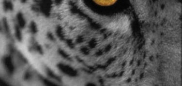 The Firewall In The Mac OSX Leopard Is Mostly Useless, Say Experts