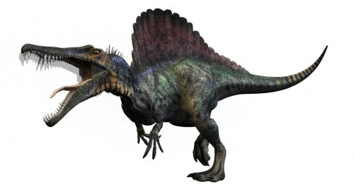 First Dinosaur ever known to swim, Dinosaur Paradise found by unlikely paleontologist